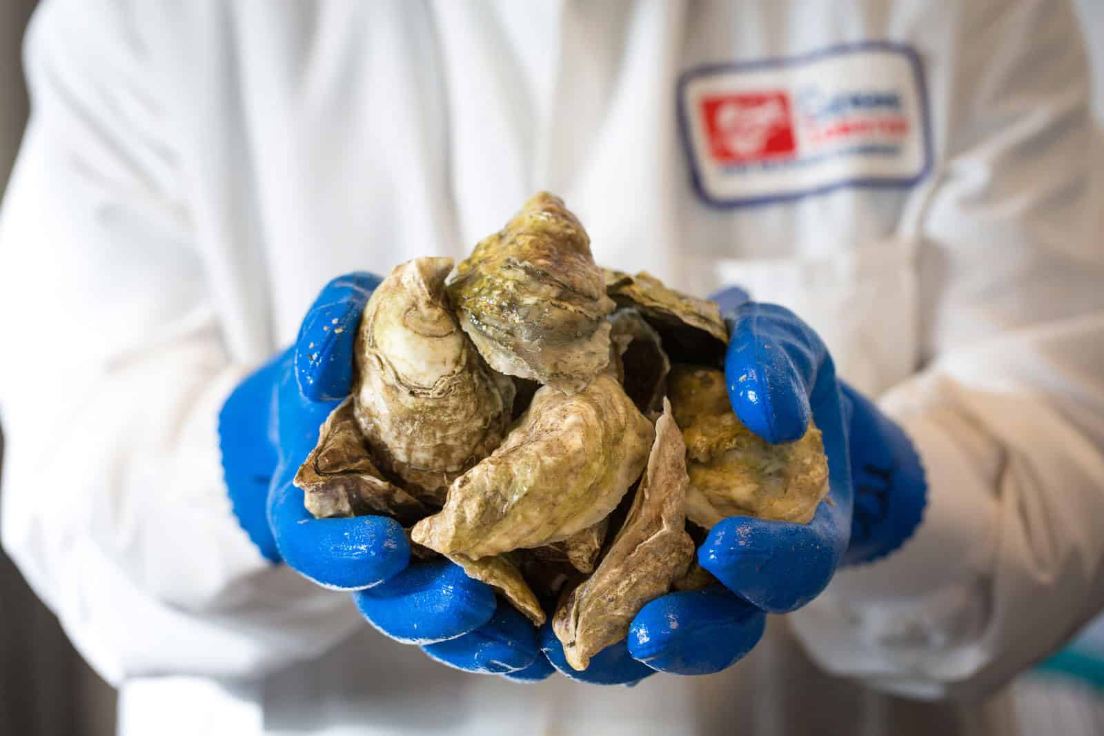 Handful of Oysters by Supreme Lobster