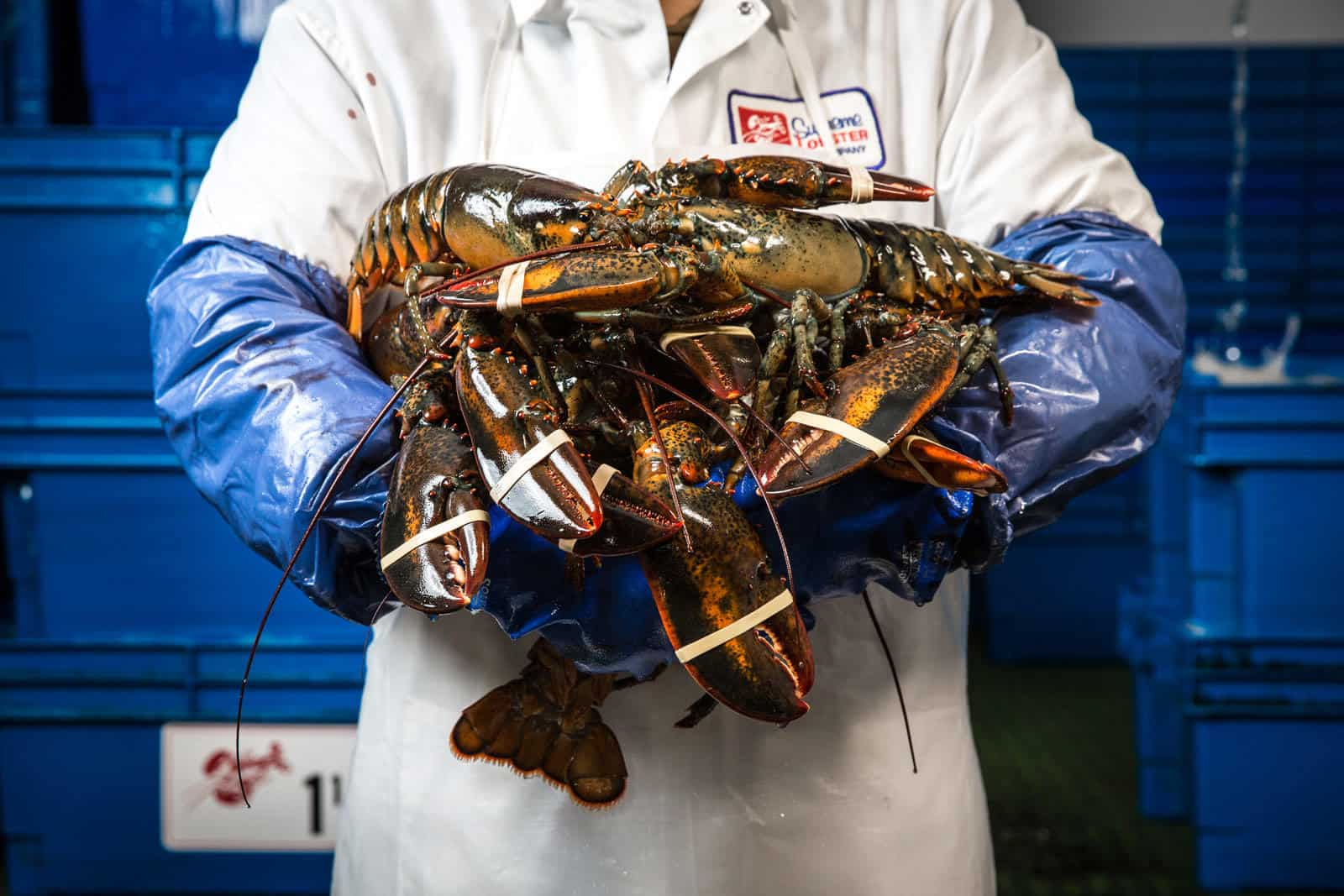 Supreme Lobster - Hands Full of Lobster