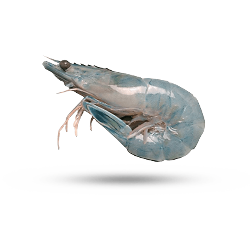 Mexican Wild Blue Shrimp