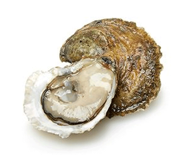 montauk pearl oysters
